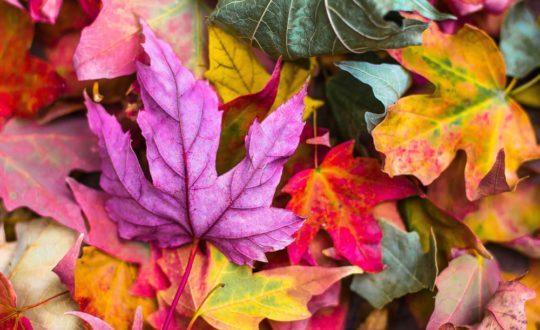 Vier de herfst in Le Marche dit jaar!