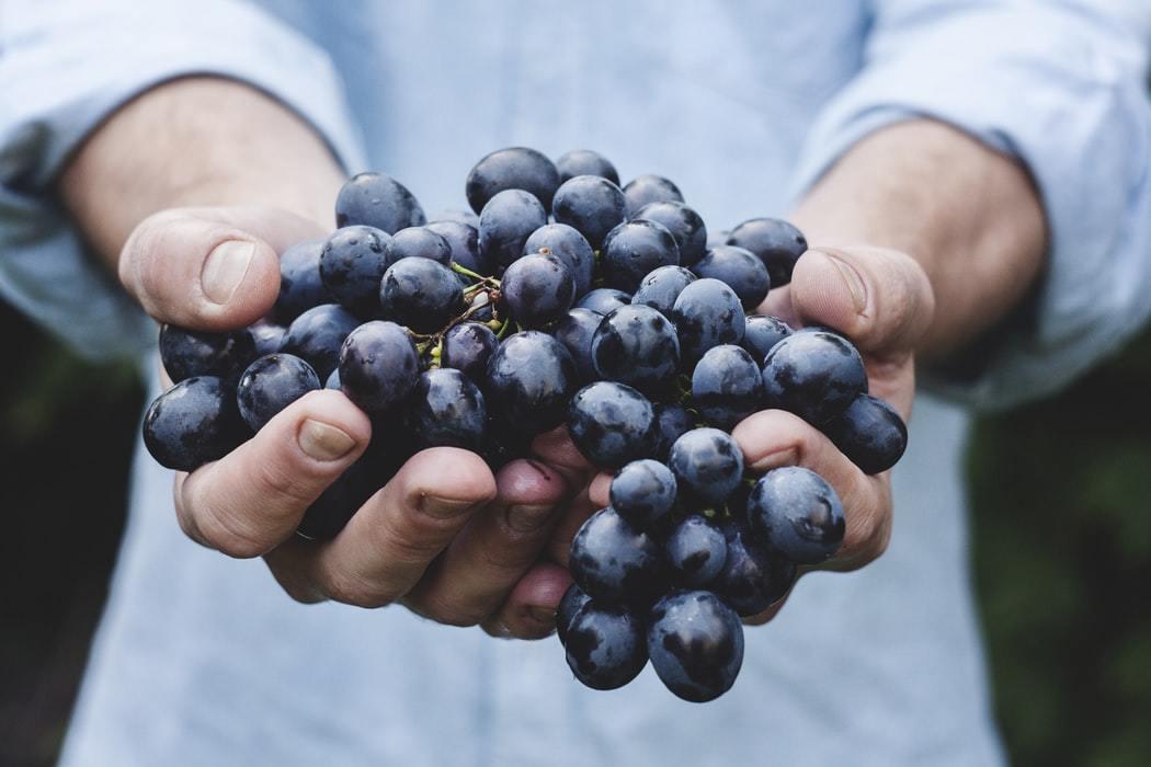 (2) De lekkerste wijnen uit Le Marche via Marche.nl